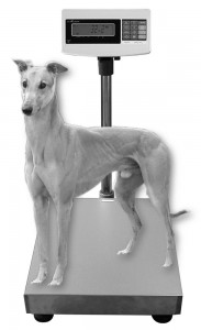 Greyhound Scale